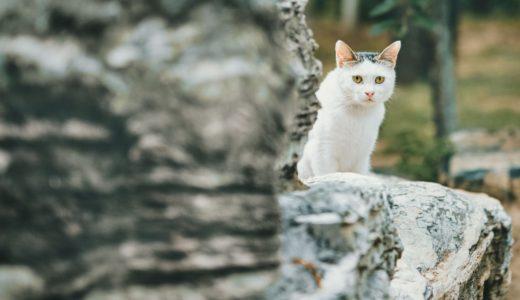 我が家にあらわれたハチワレの野良猫